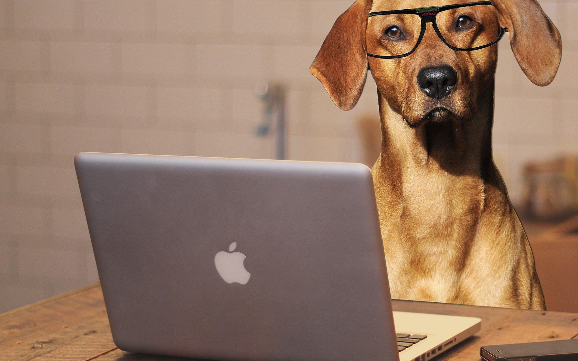 """""""Bürohunde"""" in der Verwaltung prüfen"""